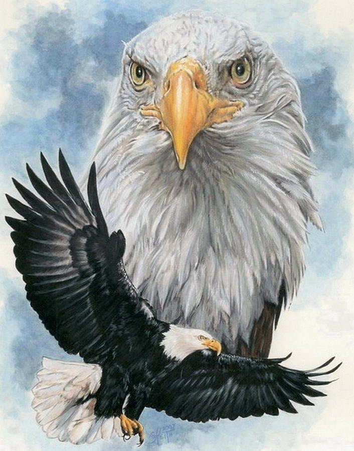Картинки орла цветные