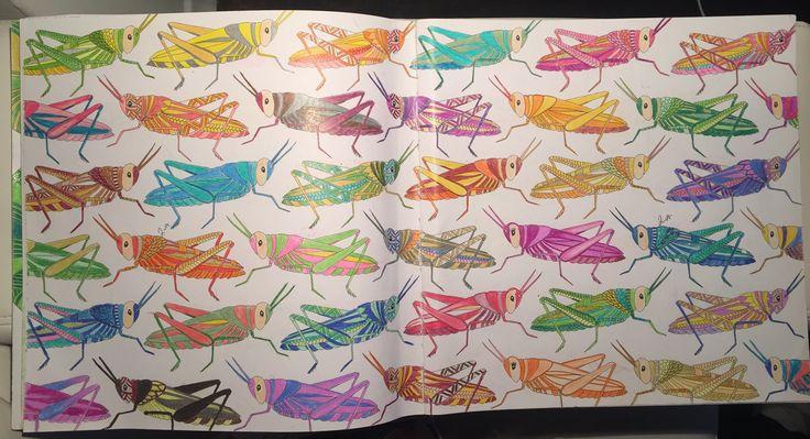 Animal kingdom- Millie Marotta- birds - color me, Draw - crickets - coloring book.