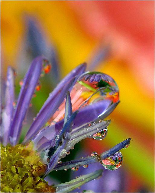 320 best Dew Drops images on Pinterest | Dew drops, Rain ...