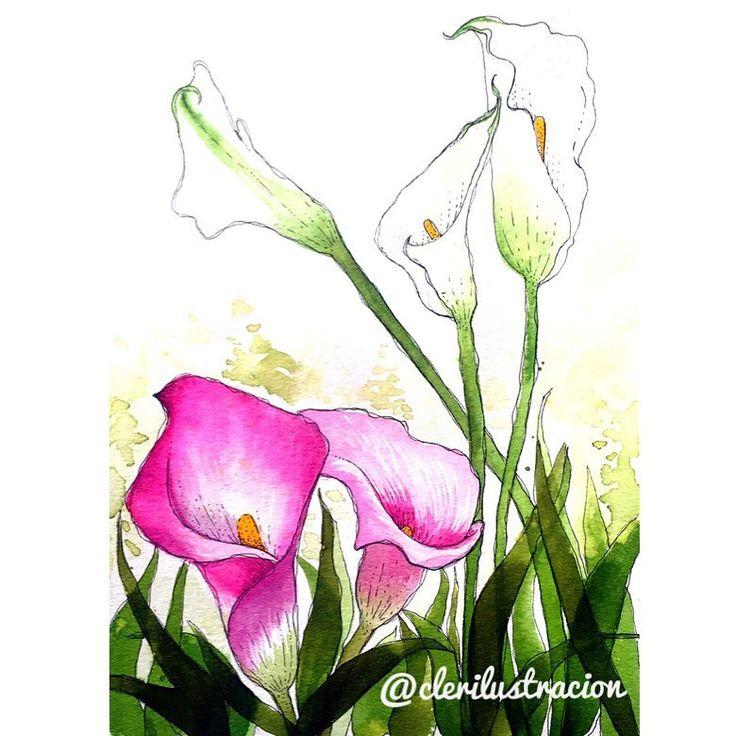 🌷💖 para @jardinbotanicodemedellin  @clerilustracion .  .  .  .  .  .  #medellin #colombia #clerilustracion #winsorandnewton #ecoline #watercolor #painting #flowers #flores #nature #illustration #rapidograph#f4f