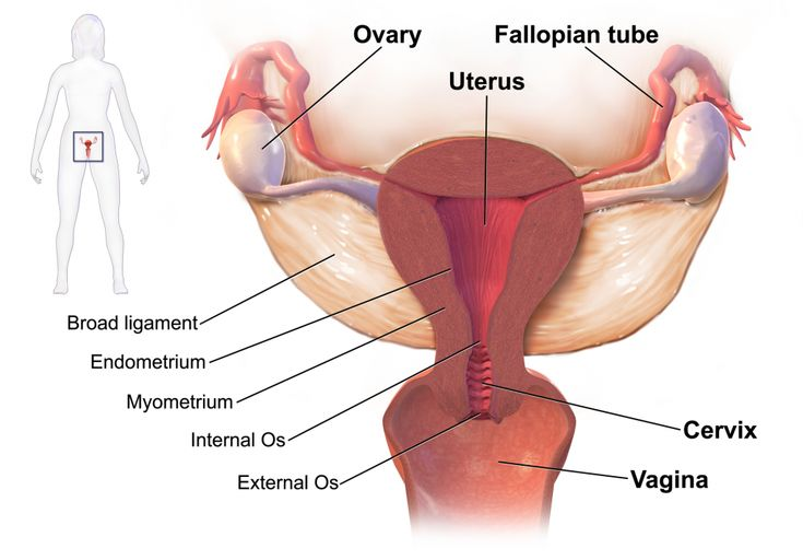 Herbal remedies for ovarian cysts are the best way to get rid from this problem in a safe way. There are various herbs present in ayurveda which support the good health of female reproductive system and also help to resolve the cysts without causing any negative impact on health.