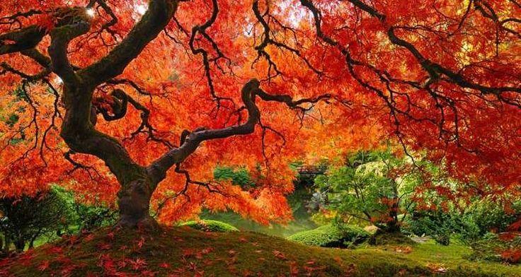 Τα 16 πιο όμορφα και εντυπωσιακά δέντρα στον κόσμο! (φωτογραφίες)