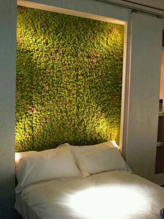 without the moss... could be a pretty amazing headboard idea with the inset/lighting