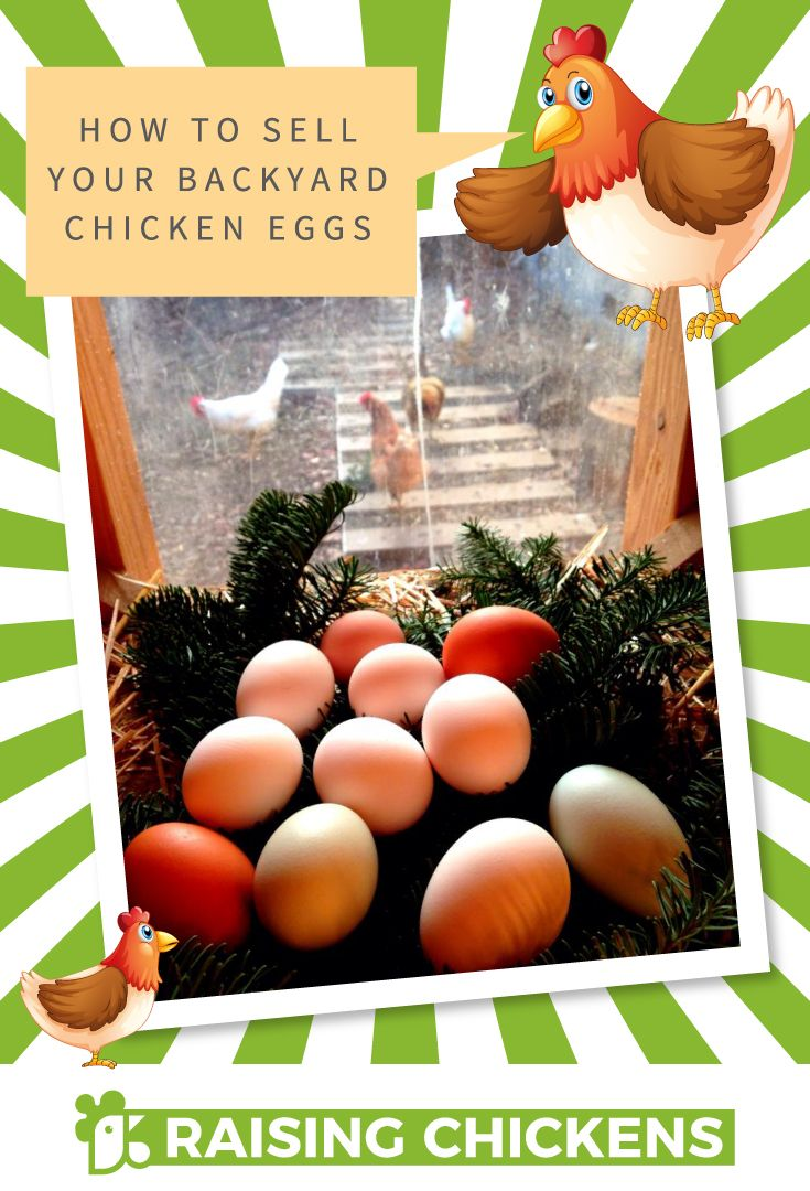 How To Sell Your Backyard Chicken Eggs Tips And Ideas On How To See Your Chicken Eggs Backyard Chickens Eggs Chickens Backyard Raising Backyard Chickens
