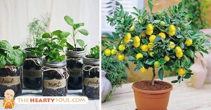 Republished with permission from naturallivingideas.com. If you love fresh fruits, vegetables and herbs but don't want to always drive to the grocery store to get them, consider container gardening. It is a rapidly expanding movement with the rising cost of food and people becoming more conscious of what they are eating. You now see apartment... View Article