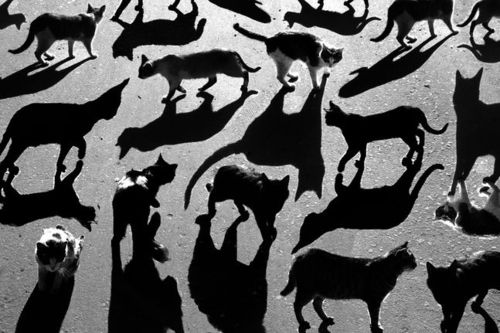 shadowsPhotos, Shadows Cat, Cat Shadows, Shadows Photography, Art, Alexey Bednij, Alexeybednij, Black Cat, Animal