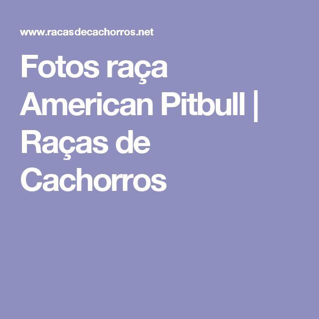 Fotos raça American Pitbull | Raças de Cachorros