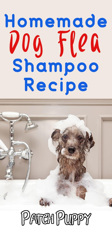 Homemade dog flea shampoo recipe step by step flea