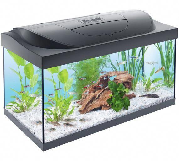 Buy Tetra 54 Litre Starter Kit At Argos Co Uk Visit Argos Co Uk To Shop Online For Fish Tanks And Stands Fish Pe Saltwater Aquarium Setup Aquarium Fish Tank