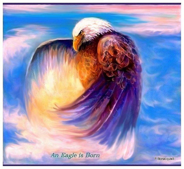 1000+ Images About Eagle Art On Pinterest