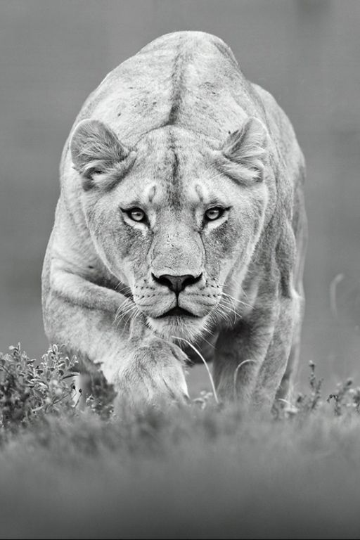 Hunter by (Shlomi Nissim)*