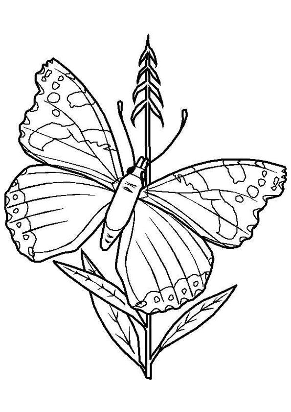 illustration colorier dun papillon entrain de se poser sur une fleur - Image De Papillon