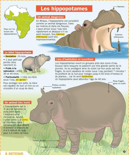 Fiche exposés : Les hippopotames