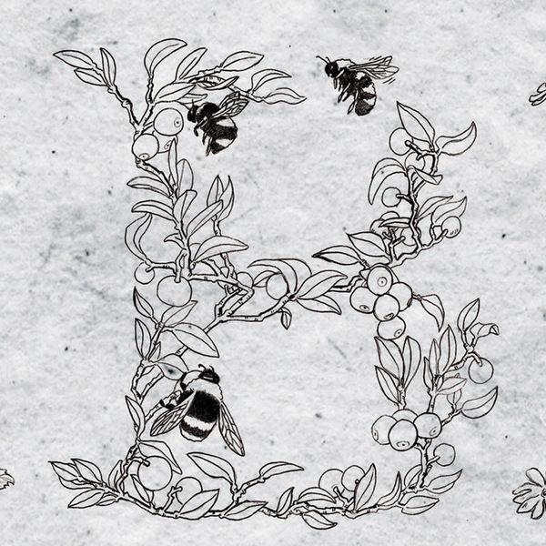 Creative idea for lettering 'B' alphabet - Bees.