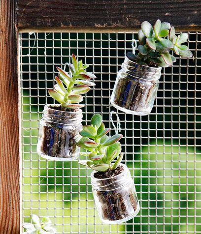 Non buttate i vasetti di vetro ma usateli per metterci le talee, bellissime piante grasse! I vasetti si possono appendere anche con del fil di ferro un po' ovunque.