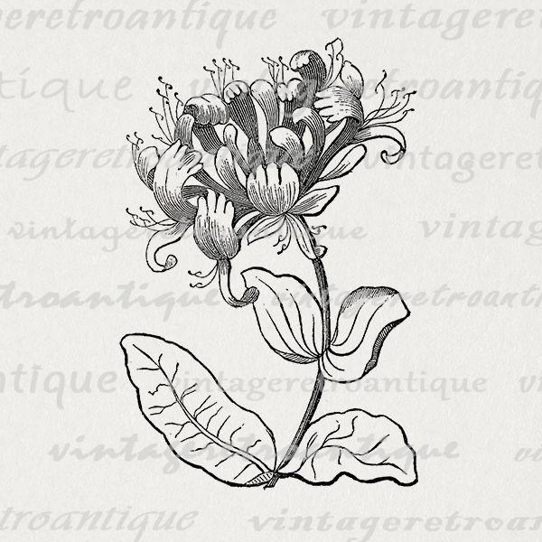 Printable Digital Elegant Flower Graphic Antique Image Download Vintage Clip Art Vintageretroantique