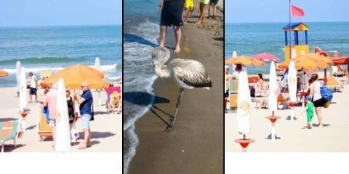 Campania: #Giugliano #sorpresa sul #litorale: un fenicottero tra i bagnanti (link: http://ift.tt/2bEVANO )