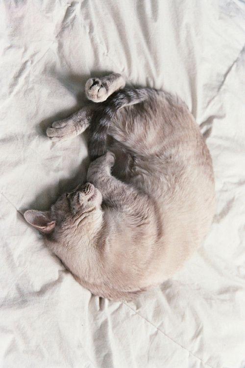La felicidad es despertarse con una alarma que #ronronea... #gatos