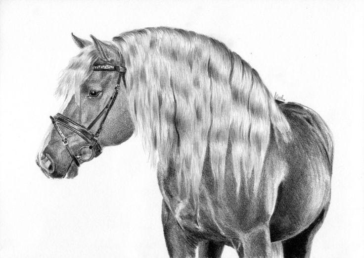 Rysunek zimnokrwistego konia