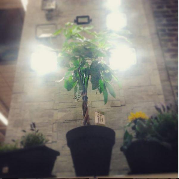 Decoração e visual merchandising da nova colecção de projectores exteriores e jardim. Leroy Merlin