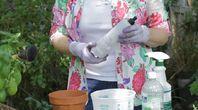 Lawn Treatments for Fleas Using Dawn Dish Detergent | eHow