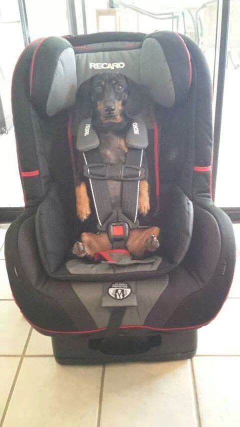 hahaha!!! This is something I would do. Except the car seat would be pink leopard and blinged out!