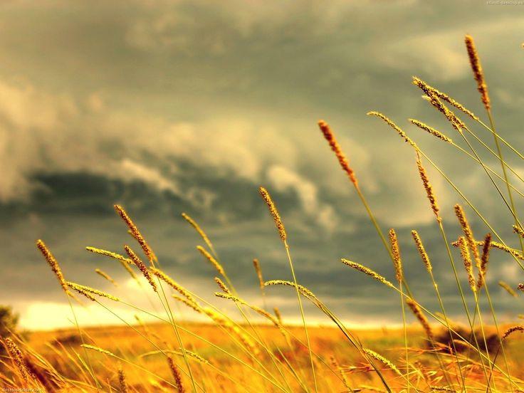 amarelo na natureza | Schaue dir den Hintergrundbild Fall in der Größe von 1600x1200 pixel ...