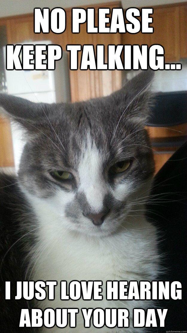 The Funniest Cat Funny Cat Photos Funny Cat Memes Cat Memes