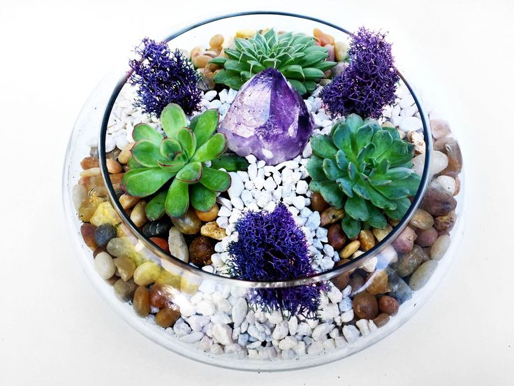 25 Best Ideas About Succulent Bowls On Pinterest Succulents Indoor Succulents And Indoor