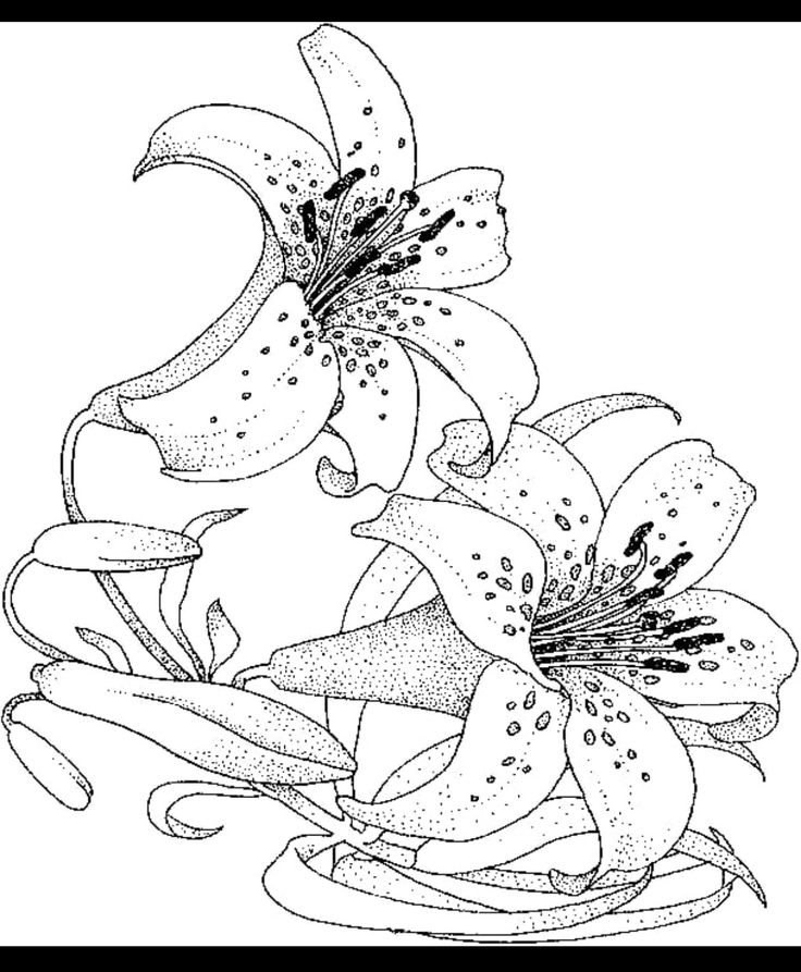 Easter Lilies in 2019 Flower coloring pages, Adult