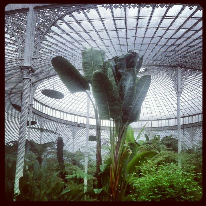 Glasgow Botanic Gardens in Glasgow, Glasgow City