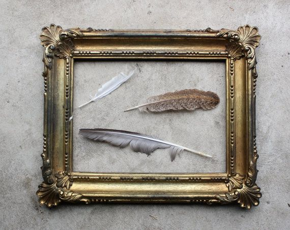 how to clean pheasant feathers properly
