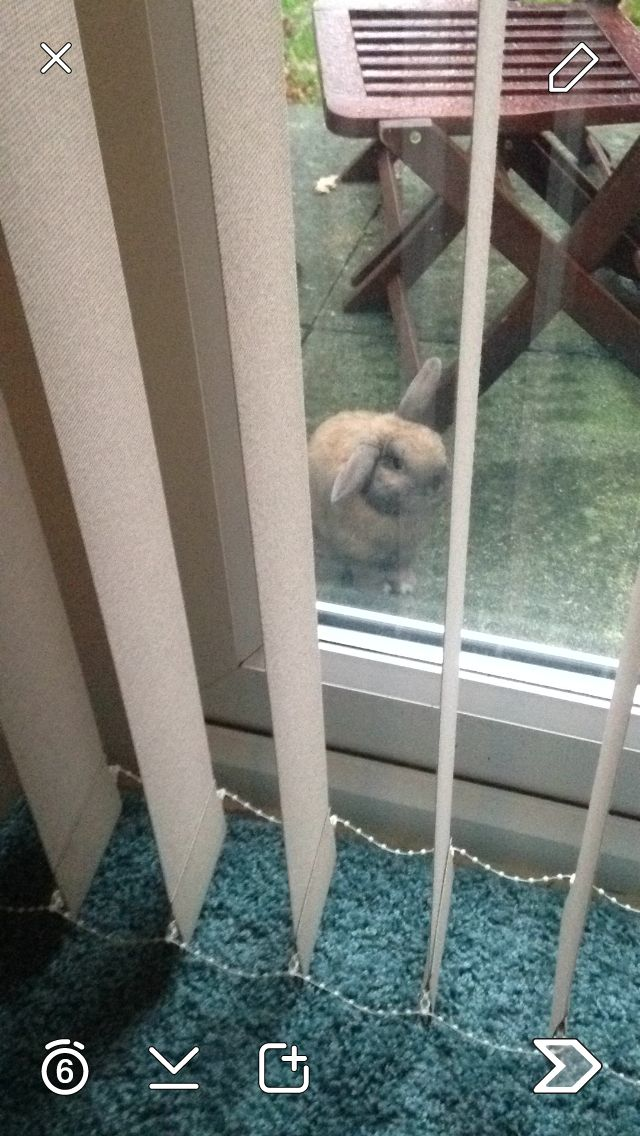 Please can I come in....