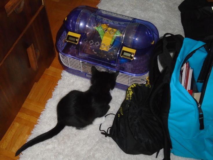 Bébé Smokey avec mon hamster maintenant défunt, Winter.