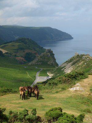Exmoor National Park, Somerset/Devon UK Valley of the Rocks South West Coastal Path