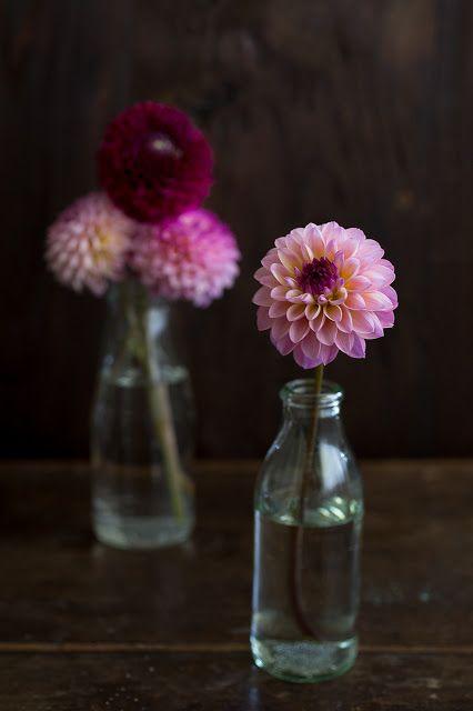 i fiori del mio giardino <3