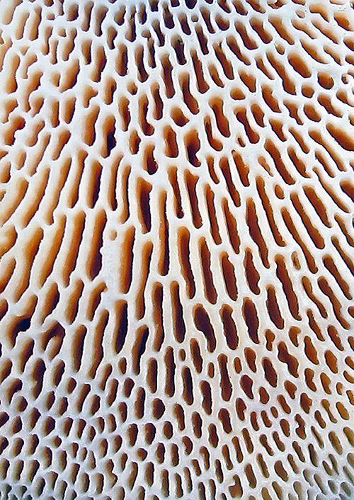 FungiCoral Texture, Warren Krupsaw, Fungi Art, Inspiration, Finding Texture, Nature Pattern, Fungi Photography, Wall Texture, Mushrooms
