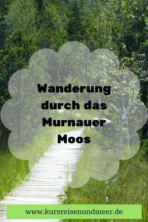 Faszinieren Dich Moore auch so? Ich finde sie toll und so habe ich mich gefreut, im Juli 2017 endlich mal eine Wanderung durch das Murnauer Moos (oder eben Murnauer Moor) zu machen. Lies' hier nach, was ich entdeckt habe!
