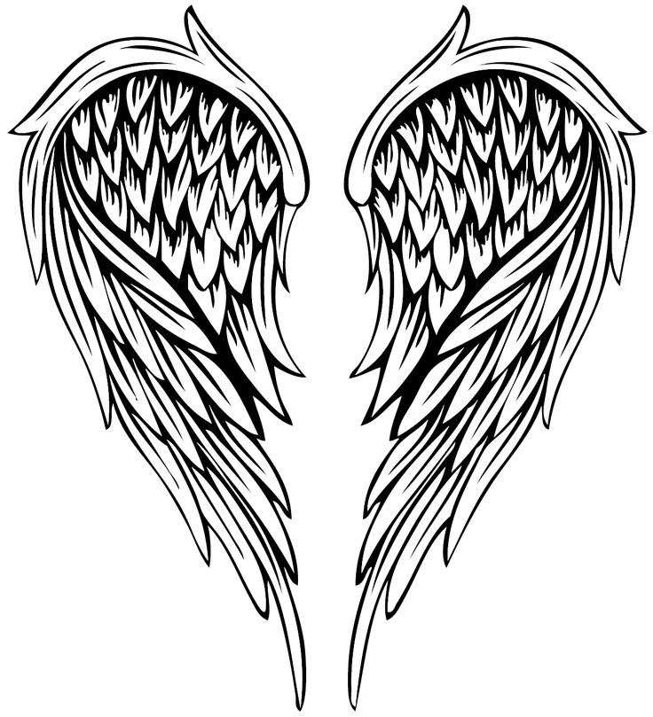 Drawing Illustration Vector painted feather angel wings