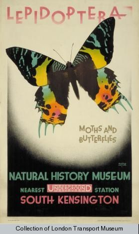 LEPIDOPTERA, BY AUSTIN COOPER, 1928 - London Transport