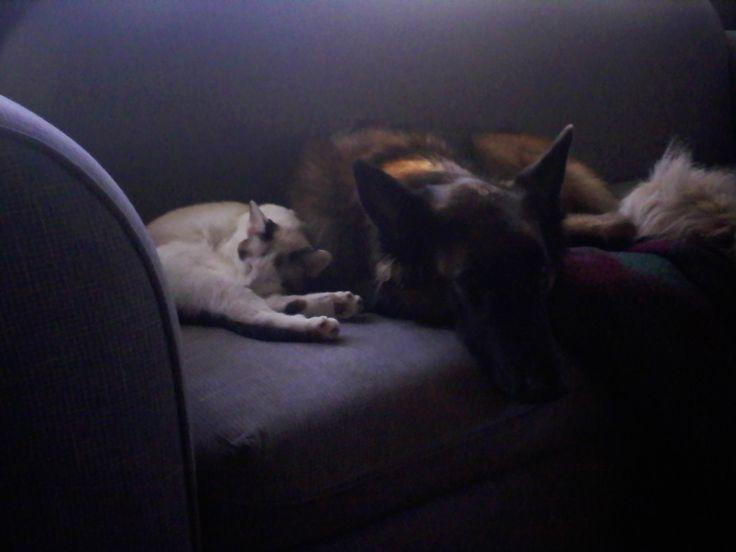 blog indoor games dogs