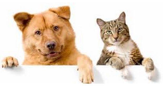 Lagos com Campanha de sensibilização de bem-estar animal   Algarlife