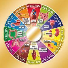 Chinesische Organ Uhr mit Möglichkeiten der Behandlung durch Tees oder Lebensmittel