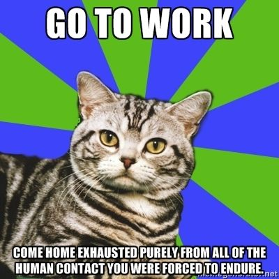 Introvert Cat: Go to work.  Come home exhausted purely from all of the human contact you were forced to endure.