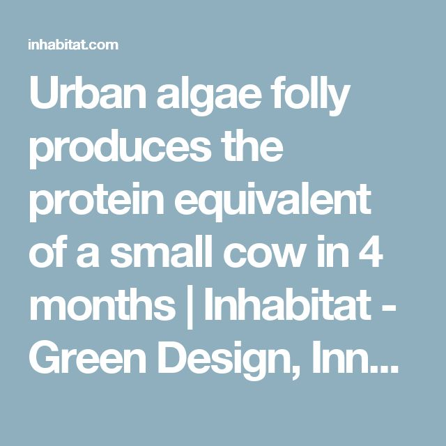 Urban algae folly produces the protein equivalent of a small cow in 4 months | Inhabitat - Green Design, Innovation, Architecture, Green Building