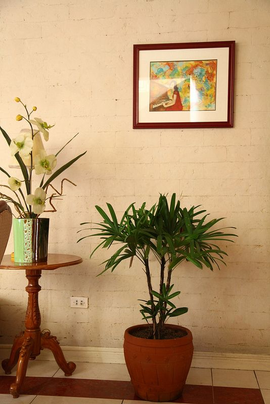 endearing house plants types. Decorating with Indoor Plants 123 best House images on Pinterest  Succulents Balconies