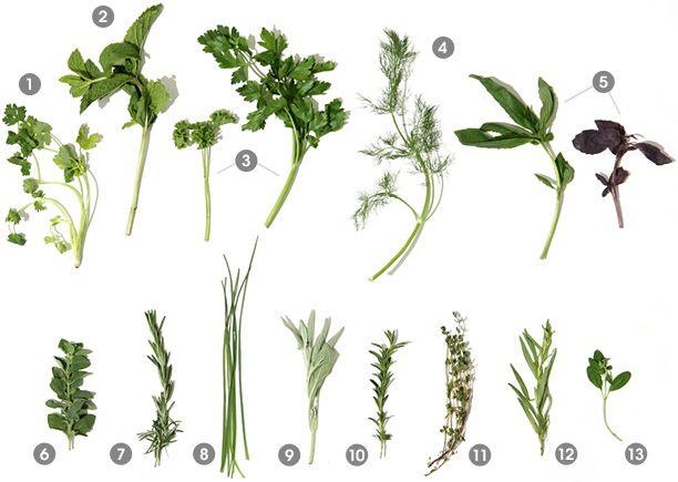 herb guide via Burnett's Boards