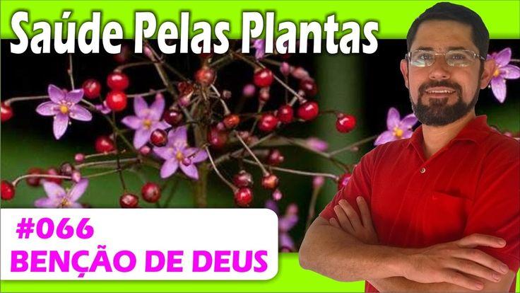 Saúde Pelas Plantas - Bênção de Deus [cicatrizante, erisipela, eczema, i...