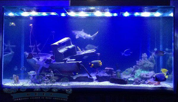aksesoris aquarium air laut