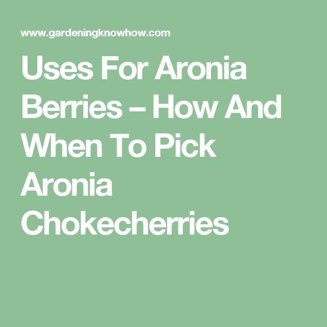 Uses For Aronia Berries – How And When To Pick Aronia Chokecherries